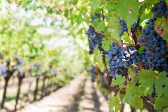 French Wineries and Vineyards